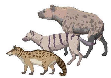 evolucion-hienas