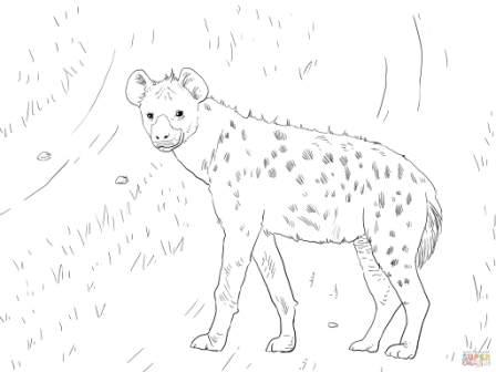 hiena-colorear